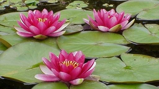 bellaflower.jpg